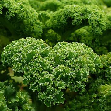 Top 5 Green Vegetables
